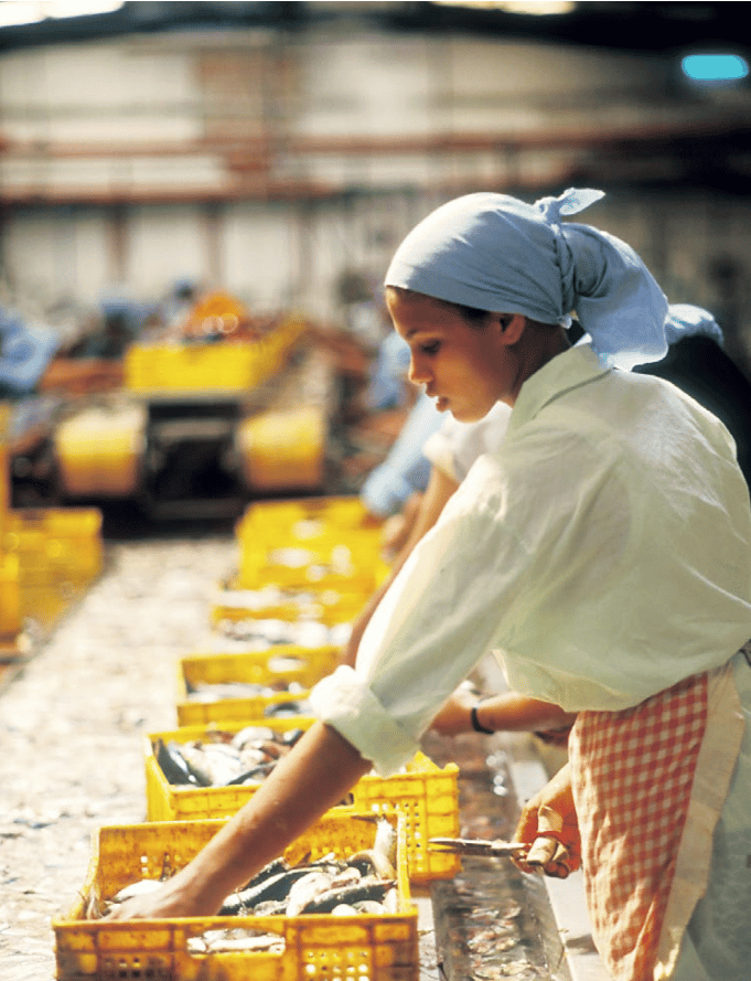 Agadir, Morocco: A worker at a local sardine factory